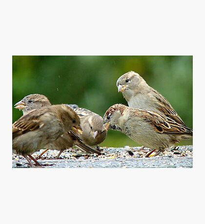 Buffet Lunch! - Sparrows - NZ Photographic Print