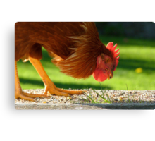 Ferdinand The Bull! - Rooster - Southland NZ Canvas Print