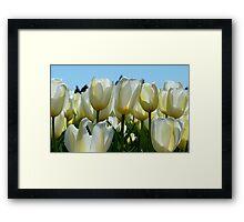 Heaven On Earth! - White Tulips - Rural New Zealand Framed Print