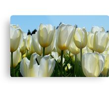 Heaven On Earth! - White Tulips - Rural New Zealand Metal Print