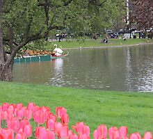 Tulips in Boston Public Garden by Michelle Callahan