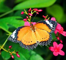 Common Orange Lacewing Butterfly by Amy McDaniel