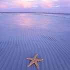 Starfish by John White