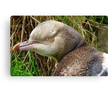 Do I Look Grumpy? - Rare Yellow Eyed Penguin - NZ Canvas Print