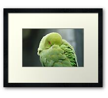 Hey I'mTrying To Catch Some Zzzzzz! - Ringneck Parrot - NZ Framed Print