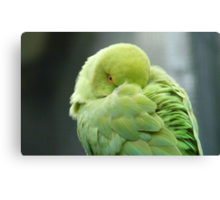 Hey I'mTrying To Catch Some Zzzzzz! - Ringneck Parrot - NZ Canvas Print