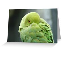 Hey I'mTrying To Catch Some Zzzzzz! - Ringneck Parrot - NZ Greeting Card