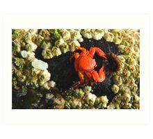 Aww!! My Dinner Plate Is Empty!! - Tiny Crab - NZ Art Print