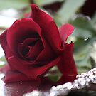 Everyone loves red roses by picketty