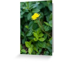 A Dandelion in the Spring Greeting Card