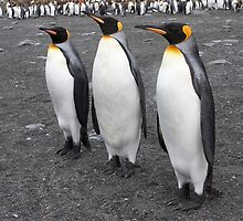 "King Penguins ~ ""On Parade"" by Robert Elliott"