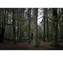 Forest edge Photographic Print