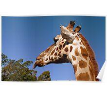 BLAHHH! - Giraffe - Orana Wildlife Park CHC NZ Poster