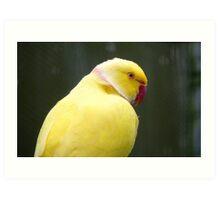 I'm A Perky Fellow! - Ringneck Parrot - Gore NZ Art Print