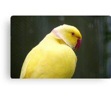 I'm A Perky Fellow! - Ringneck Parrot - Gore NZ Canvas Print