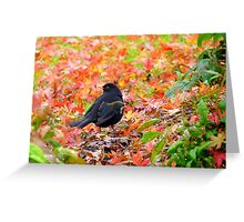 Autumn Rush! - Blackbird - Southland NZ Greeting Card
