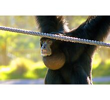 Hey I'm The Pro at Brachiating! - Siamang - Orana Wildlife Park CHC NZ Photographic Print