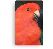 I Got A Twinkle In My Eye! King Parrot - Gore Gardens NZ Canvas Print