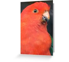 I Got A Twinkle In My Eye! King Parrot - Gore Gardens NZ Greeting Card