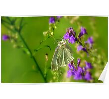 Tropical Nectar! - Cabbage Butterfly! - Southland NZ Poster