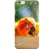 I'm Singing In The Rain..!!! - Sun Conure - NZ iPhone Case/Skin