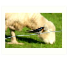 Hey Sir!!..You Eat Allot Of Grass!!! - Welcome Swallow - NZ Art Print
