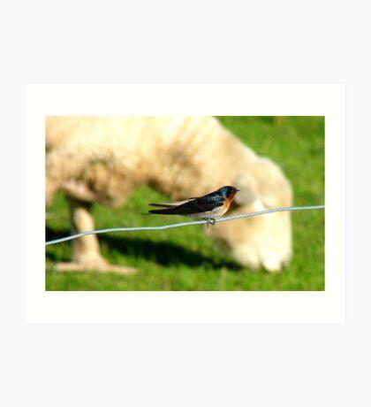 Hey Sir!!..You Eat Allot Of Grass!!! - Welcome Swallow - NZ Art Print