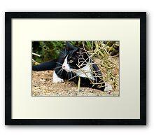 Aww!!..That One Got Away! - Spike Kitten - NZ Framed Print