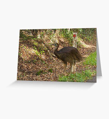juvenile cassowary Greeting Card