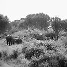 Elephant Gathering by skaranec1981