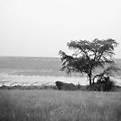 Lonely Tree by skaranec1981