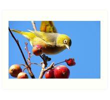 Berry, Berry Delicious - Silver-Eye - Gore Southland Art Print