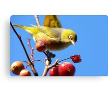 Berry, Berry Delicious - Silver-Eye - Gore Southland Canvas Print