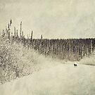 Walking Luna by Priska Wettstein