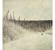 Walking Luna Photographic Print
