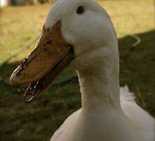 Daisy Duck Loves to Talk by DuckDuckDog