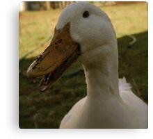 Daisy Duck Loves to Talk Canvas Print
