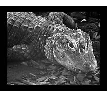 reptile 01 Photographic Print