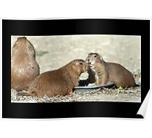 prairie dogs 01 Poster