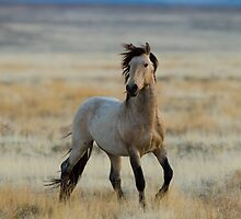 New Stallion by Kent Keller