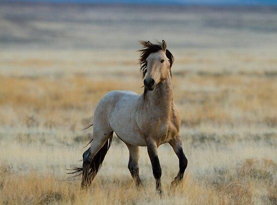 New Stallion by Kent Keller