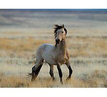 New Stallion Photographic Print