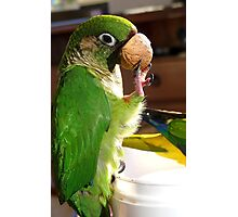 Is This A Good Muzzel! - Bubbles - Maroon-Bellied Conure - NZ Photographic Print
