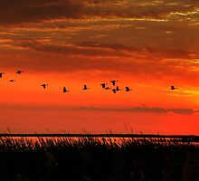 Wings on High!!! by Larry Trupp