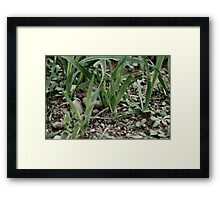 grass 01 Framed Print