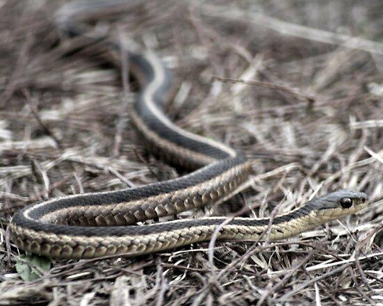 snake 01 by Kittin