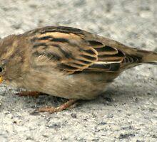 bird 24 by Kittin