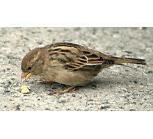 bird 24 Photographic Print