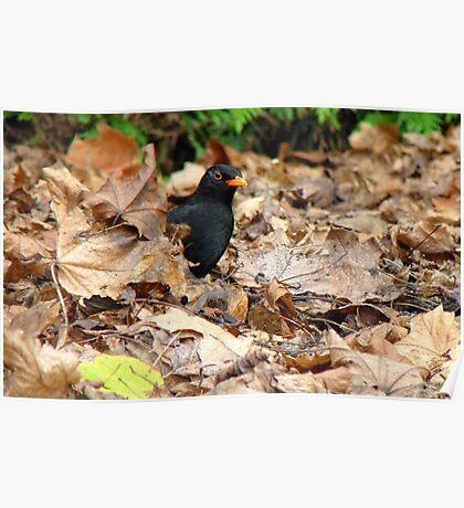 Did you Knock? - Blackbird - Gore NZ Poster