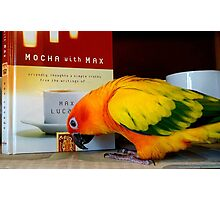 Mmm...Friendly Thoughts And Simple Truths - Sun Conure - NZ Photographic Print